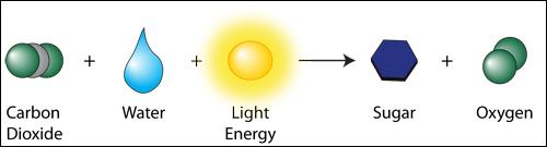 cellularrespiration_equation